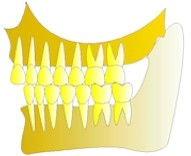 Toutes les pièces de la construction sont en place, les dents s'équilibrent entre elles.